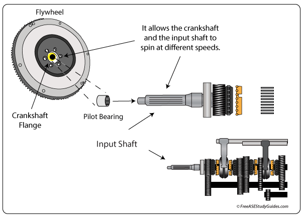 Clutch pilot bearing location and function.